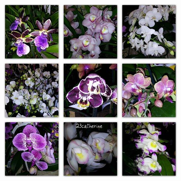 Botanic, le 20 déc. 2012