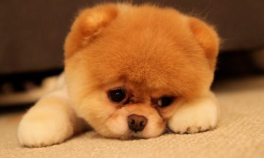 boo-chien-1