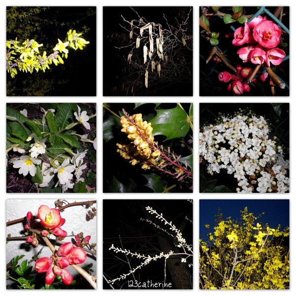 2013_03_27 fleurs