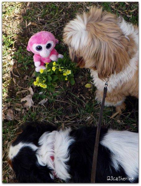 Alors qu'Elle s'apprête à photographier Razberry et les coucous, le chien mal coiffé et le chien à grande langue viennent saboter sa mise en scène.