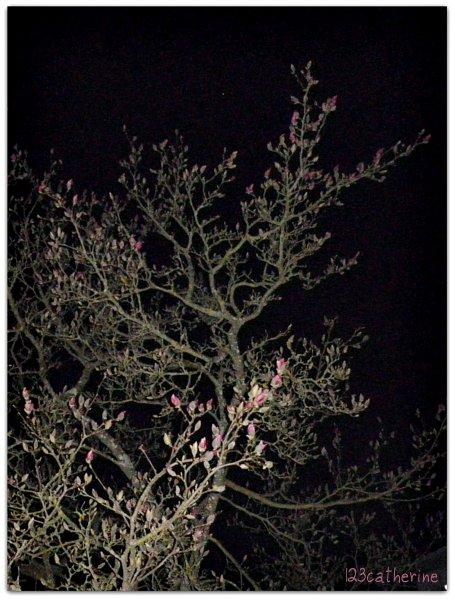 magnolia 27 mars 2013
