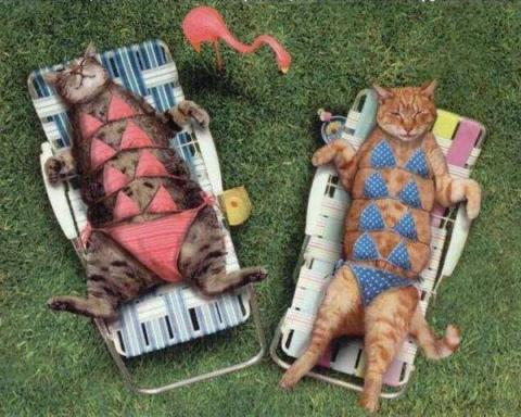 minettes en bikini