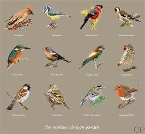 oiseaux_jardin_ox