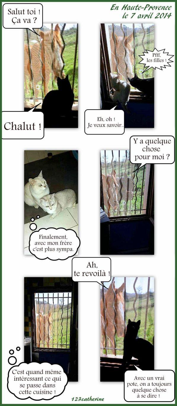 discours de bêtes