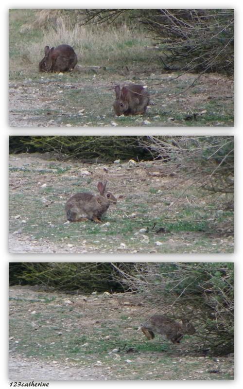 2014-05-19 lapins loix