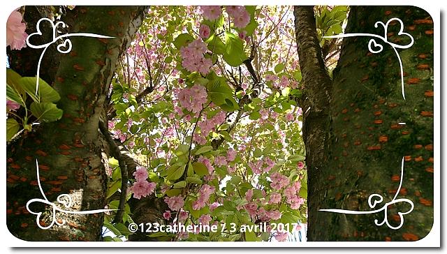 Fotor_149124136169496